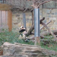 Tai Shan and Mei Xang
