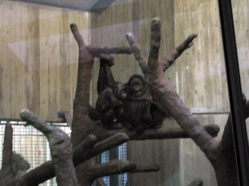 orangutan cuddle